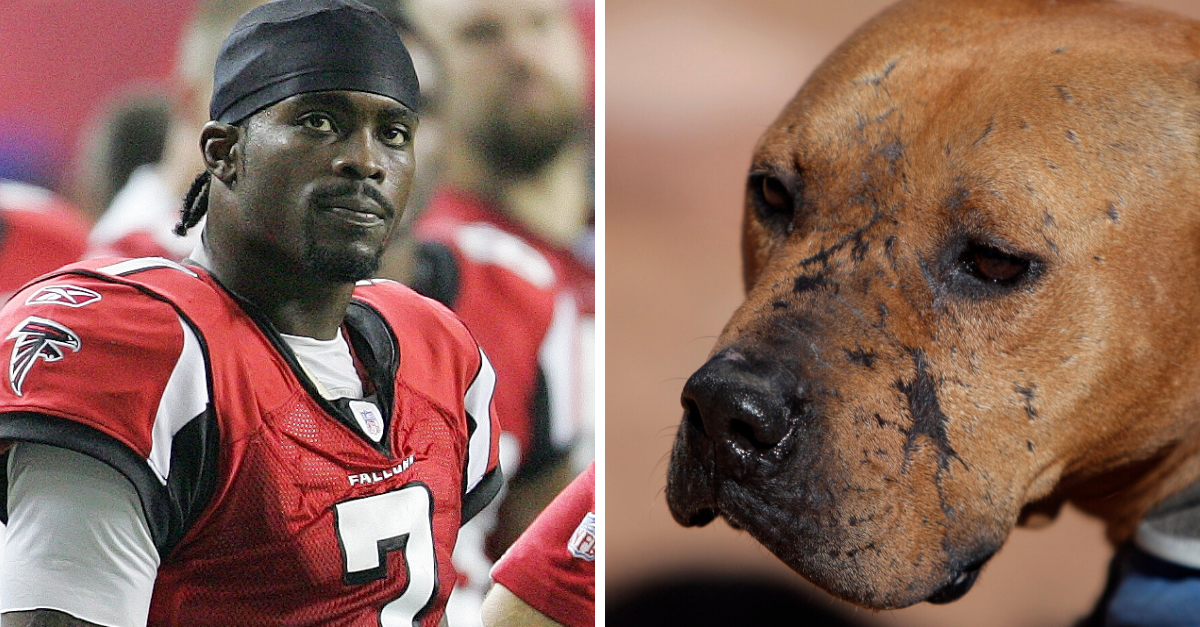 Michael Vick and Dogfighting